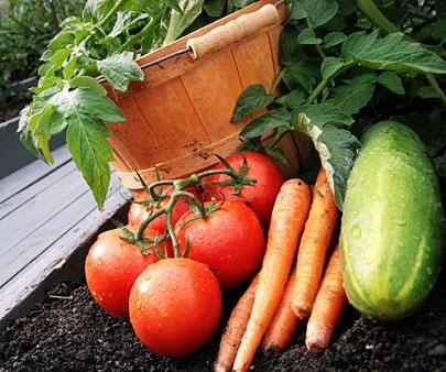 how to plant a garden tips