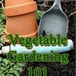 vegetable gardening 101 planning basics guide