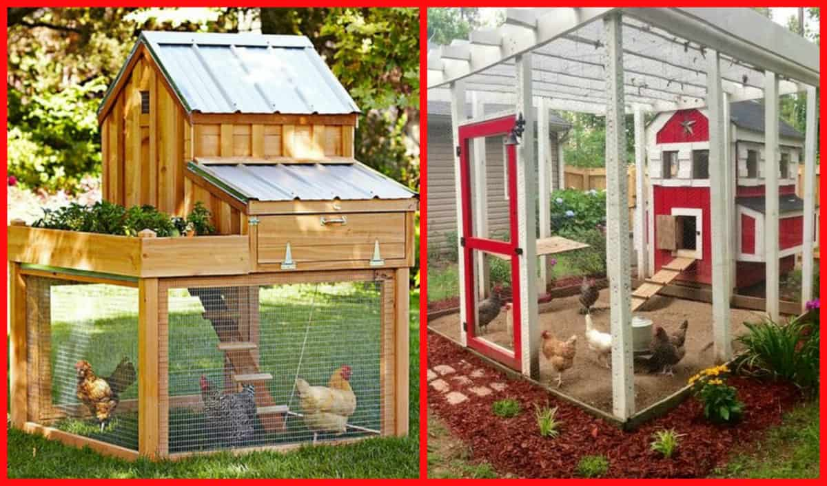 100\'s Of Free Chicken Coop Plans