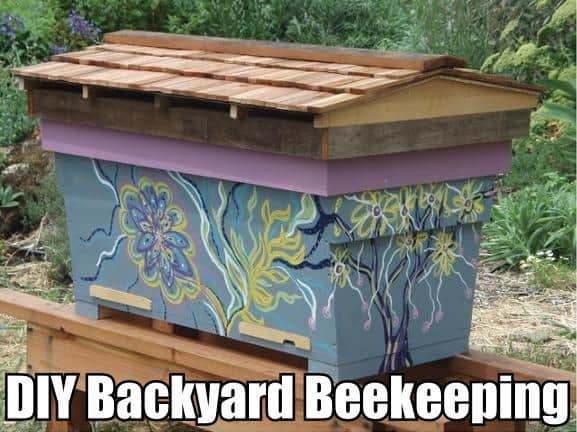 diy backyard beekeeping for beginners