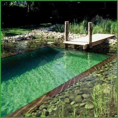 Natural swimming pools diy cozy home for Pond swimming pool