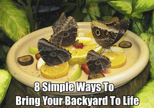 how to attract butterflies to backyard