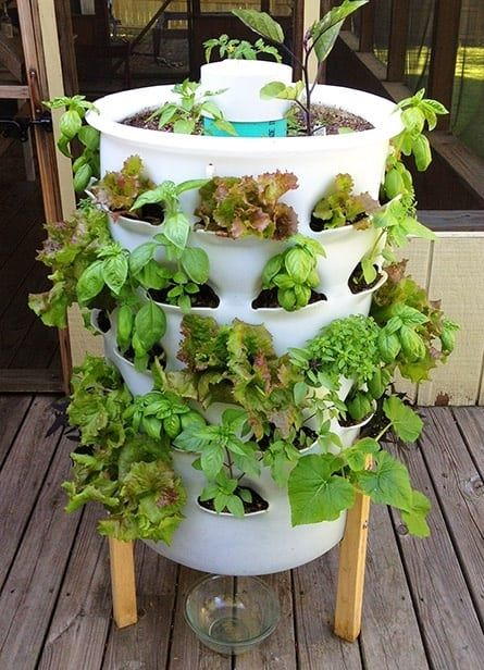 Grow Your Own Food 10 Gardening Ideas For The Beginner