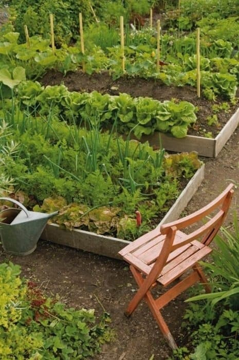 Grow Your Own Food 10 Gardening Ideas For The Beginner Diy Cozy Home