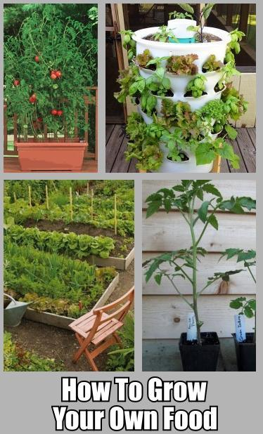 Grow your own food 10 gardening ideas for the beginner for Food garden ideas