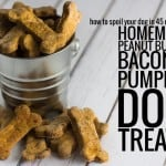 bacon pumpkin doggy treat