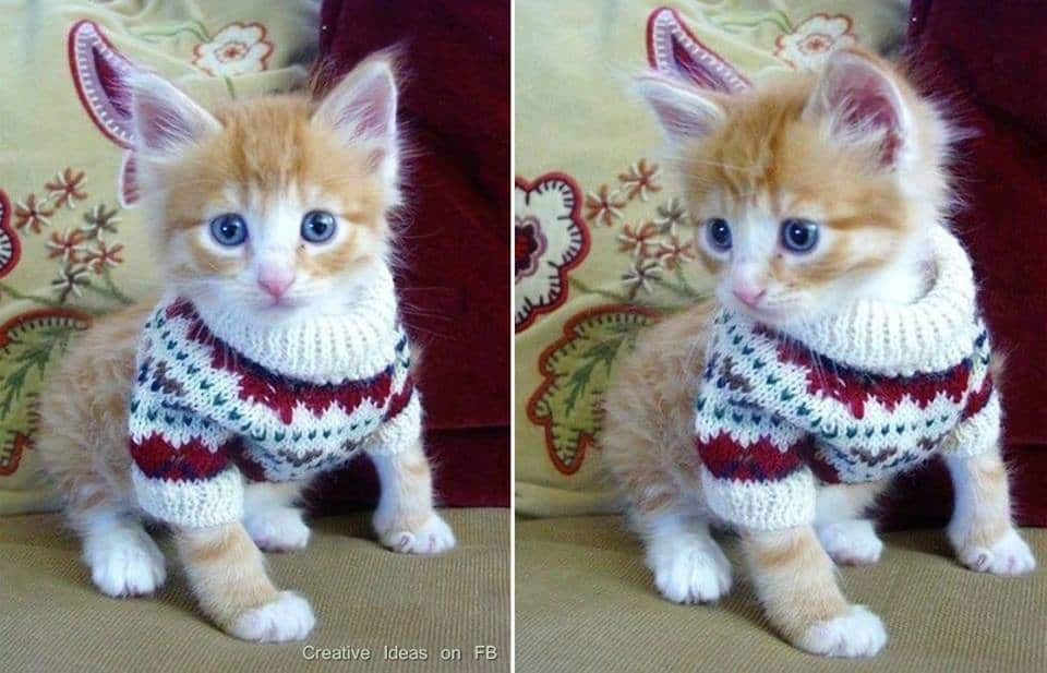 Cat Sweater Patterns