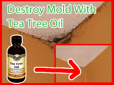 remove mold with tea tree oil