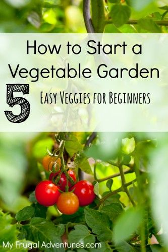5 Easy Vegetable For Starting Your Own Garden