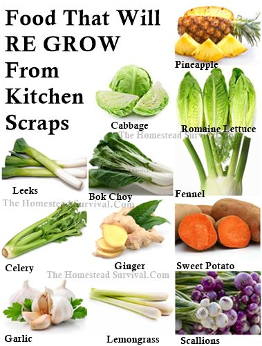 16 Kitchen Scraps That Will Re-grow