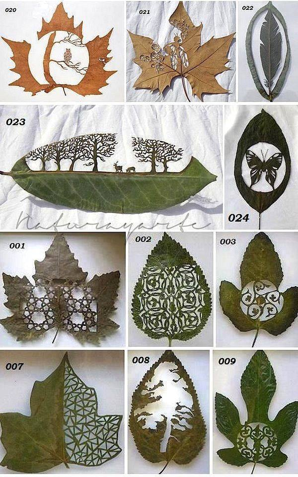 Leaf Cutting Art By Lorenzo Manuel Duran