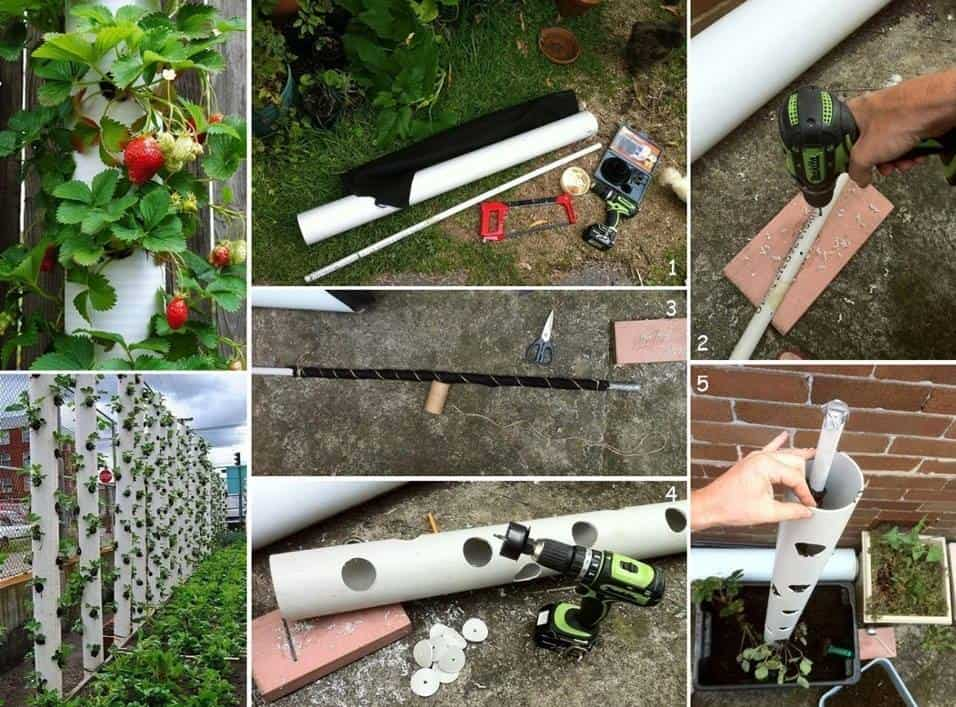 DIY Strawberry Tube Planter