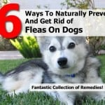 6 Natural Flea Remedies For Dogs