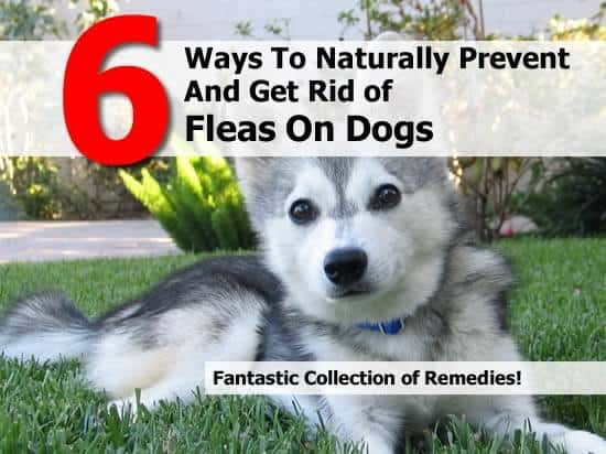 Best Ways To Keep Bugs Off Dogs