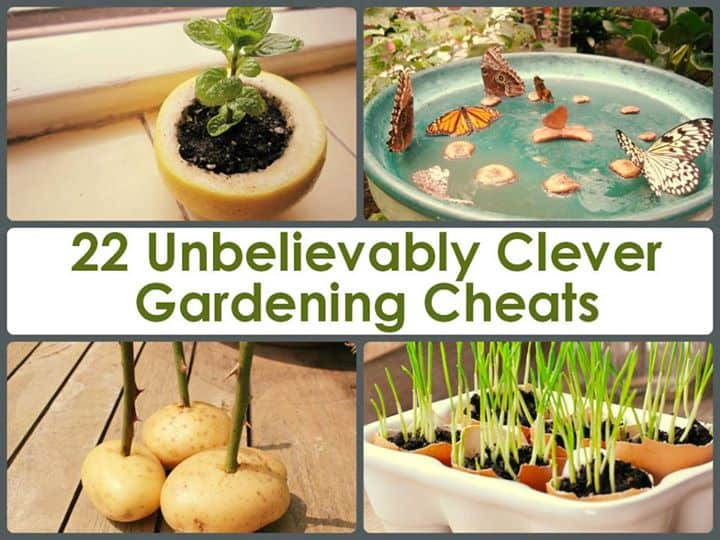 22 Incredibly Clever Gardening Cheats