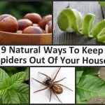 9 Natural Ways To Keep Your Home Spider Free
