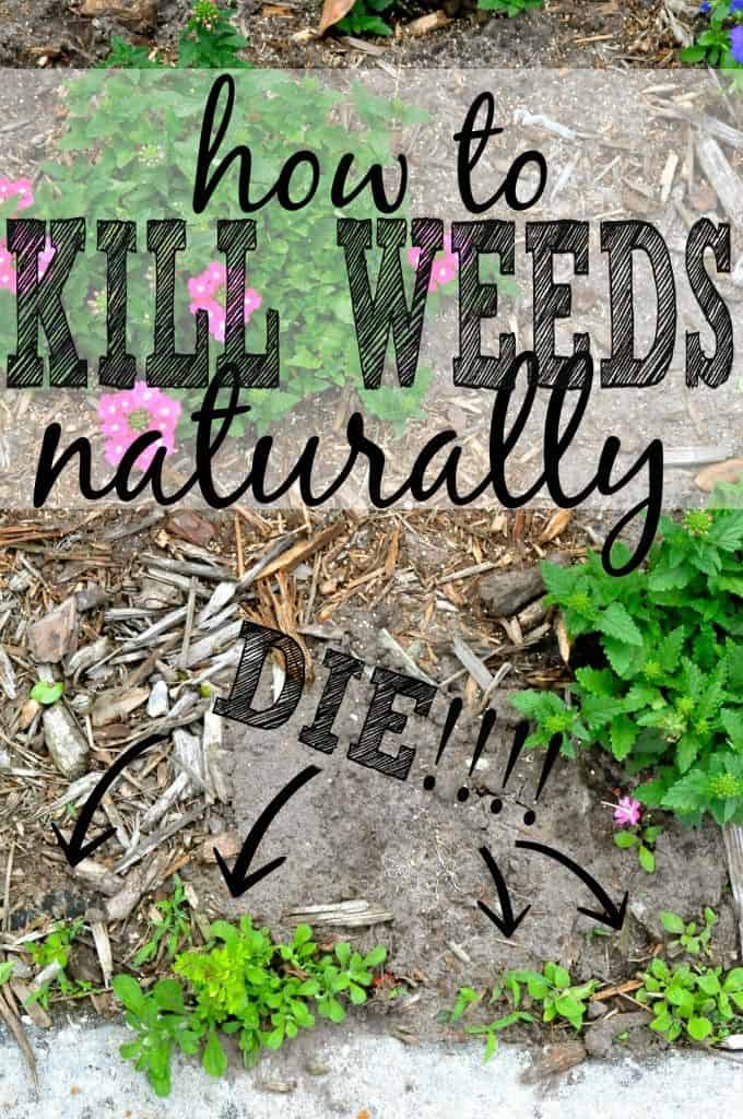 Three DIY Natural Weed Killers