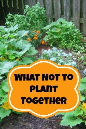 "Where To Plant ""Unsocial"" Plants"