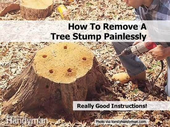 Easy Tree Stump Removal