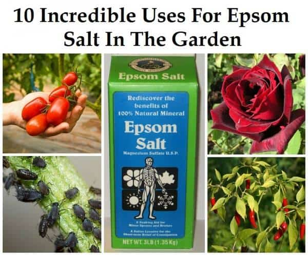 10 Reasons Why The Garden Needs Epsom Salts