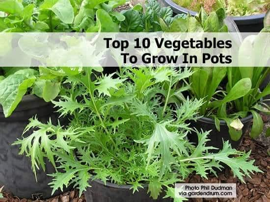 10 Easy Veggies To Grow In Pots