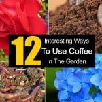 12 Intriguing Ways To Use Coffee In The Garden