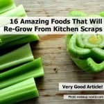 16 Food That'll Regrow From Kitchen Scraps