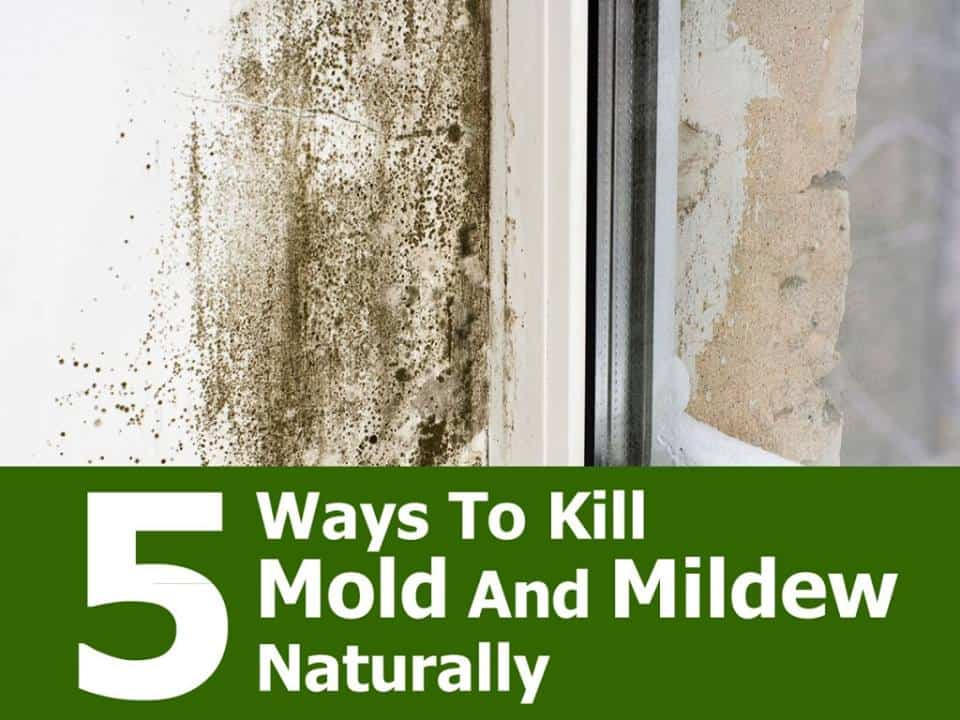 5 Natural Ways To Kill Mold And Mildew