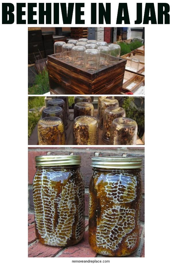 Easy DIY Beehive In A Jar