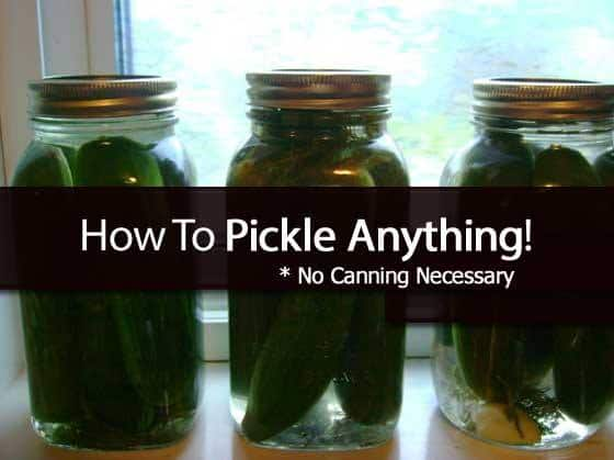 DIY Pickling Tutorial (No Canning Needed)