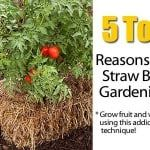 The Secrets Of Straw Bale Gardening