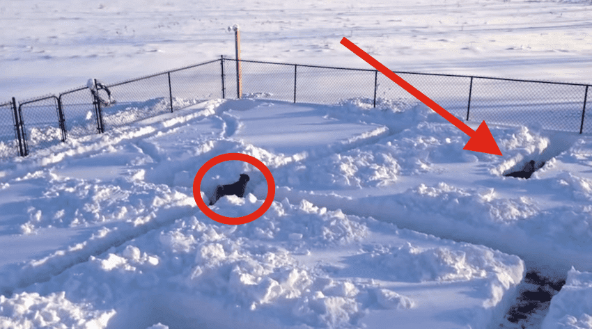 Dog In Snow Maze