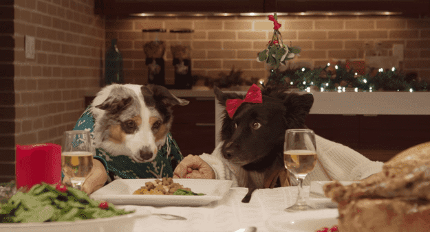 dog holiday dinner