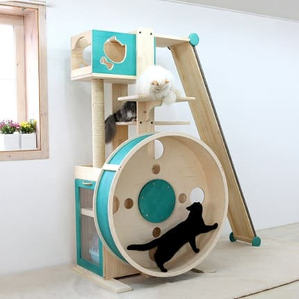 stylish cat wheel gym