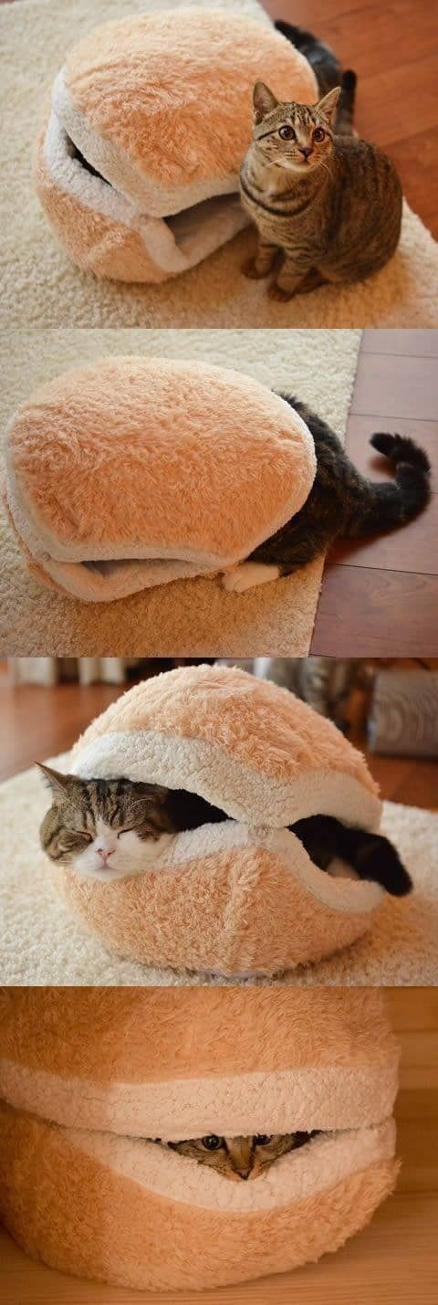 cat bun bed