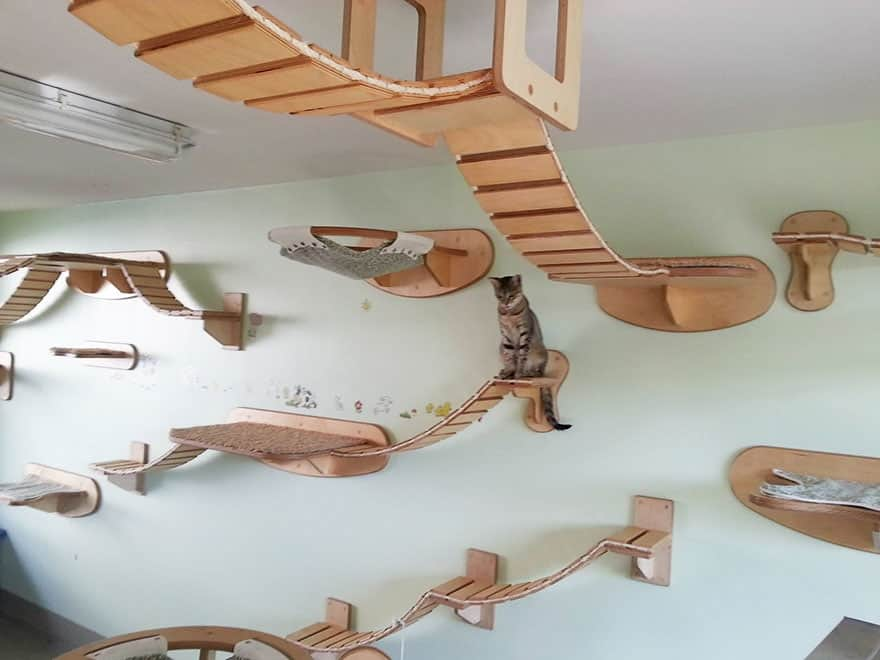 cat hanging walkways