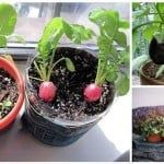 vegetables for container gardening