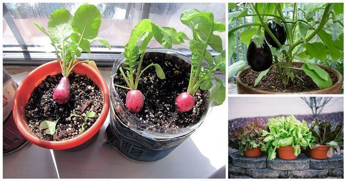 The Perfect Vegetables For Successful Container Gardening DIY