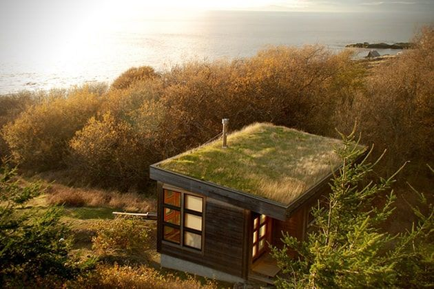 tiny home green roof