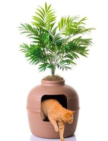 plant kitty litter