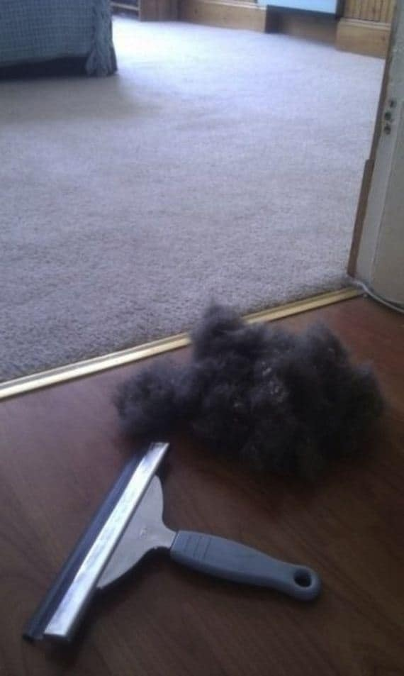 squeegee remove pet hair