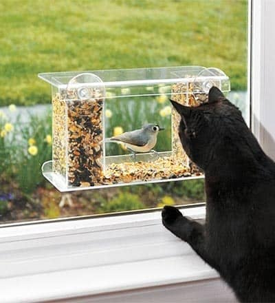 cat window bird feeder