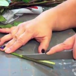 She Slices The Stem Of A White Rose. The Reason? Brilliant!