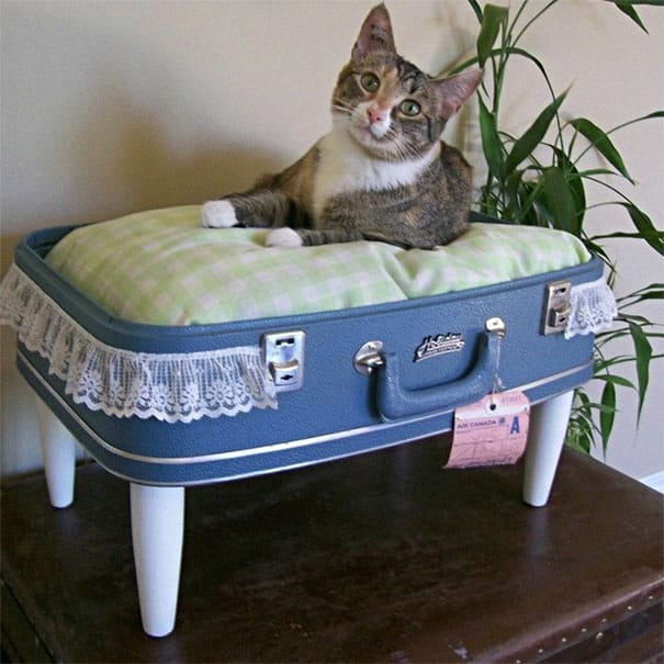 suitcase cat bed