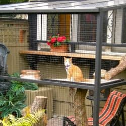 Keep Your Cat Safe With It's Own 'Catio'