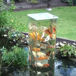 These Fish have Their Own Lookout Tower