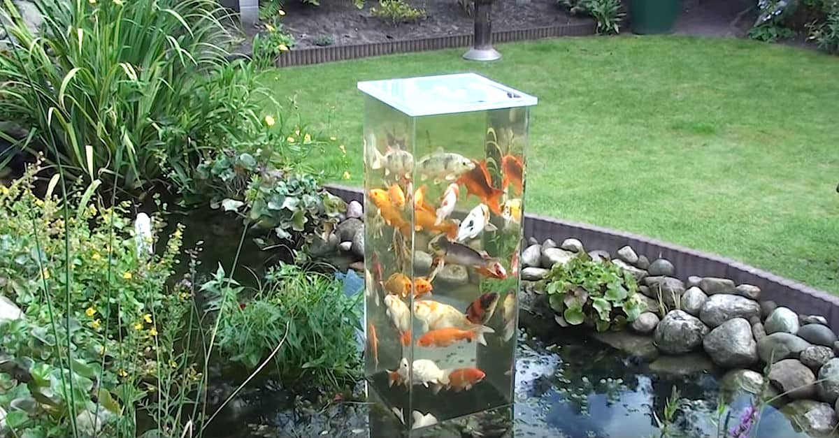 These Fish have Their Own Lookout Tower   DIY Cozy Home