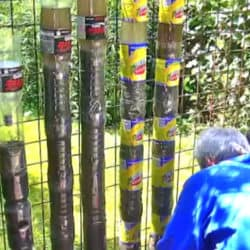 Use Plastic Bottles To Go Vertical With Your Garden