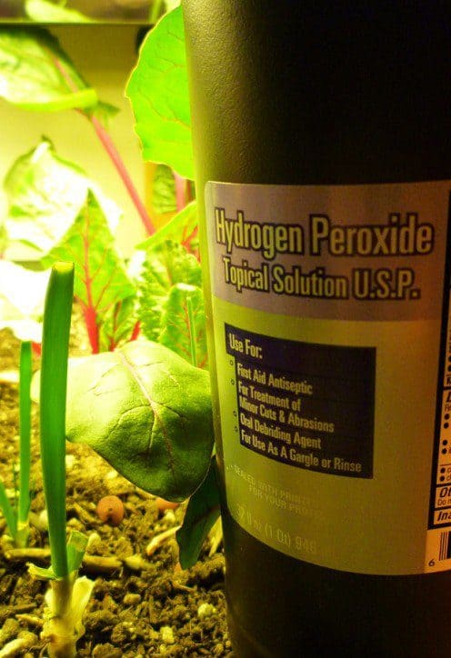 uses for hydrogen peroxide water plants