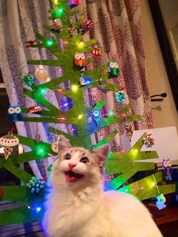 DIY Christmas tree cat-friendly